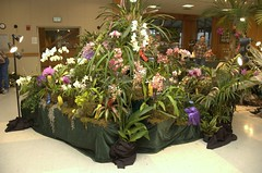 Western North Carolina Orchid Show
