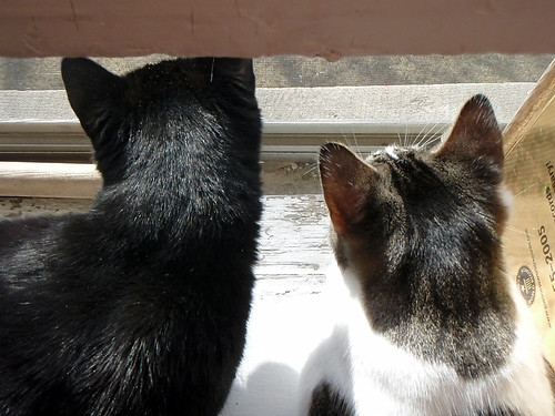 cats on the windowsill 1