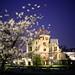 原爆ドーム:Hiroshima Sakura 広島桜