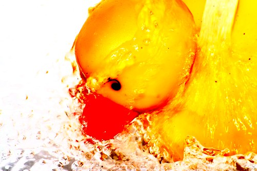 ducky takes a shower