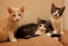 (Tim Dorr) Tags: pet cats pets animal animals cat kitten kitty kittens kitties