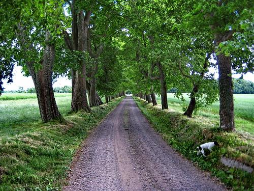 Elm Driveway