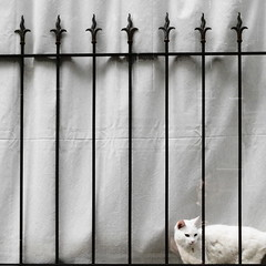 a white cat behind bars