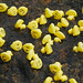 Bollington Duck Race - The race