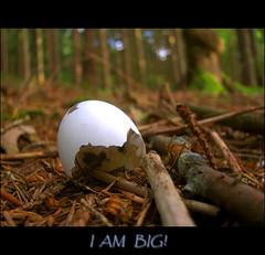 I am big! (Martinca) Tags: bird nature egg martina naturesfinest 10faves flickrsbest mywinners abigfave newacademy naturewatcher natureoutpost theperfectphotographer multimegashot photographyexpressions