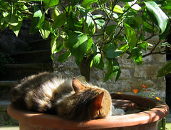 Cat's life_3 (Xena*best friend*) Tags: boss cats pets chats furry feline kitty kittens piemonte gato gatto katzen feral hardlife catslife longhaircats canondigitalixus50 piedmontitaly