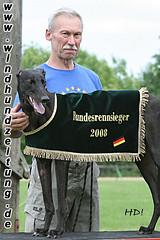 Greyhounds-Hündinnen
