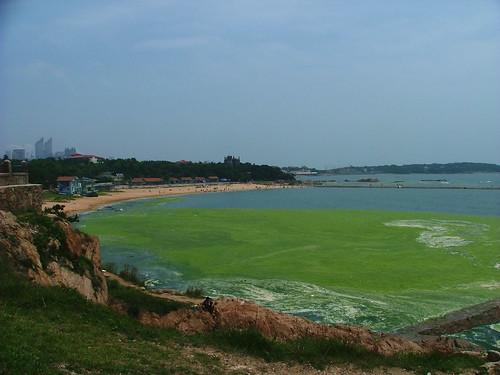 Algae Bloom for Olympic sailors