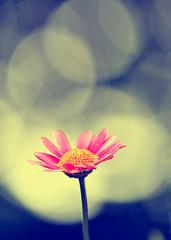 Rise to the Bokeh (EXPLORED!) (ricdiggle) Tags: flower wednesday happy bokeh hbw krishlikesit happybokehwednesday