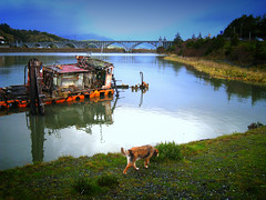 Dog Day Afternoon (ddk4runner) Tags: ocean old bridge sea copyright seascape nature water oregon landscape coast boat sink pacific arches tug wreck allrightsreserved delapidation ddk4runner maryhume copyrightdonnakerley donnakerley donnakerley ddkstudio ddk4runner