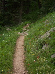 Wildflowers alongside Trail (mtncanyon) Tags: lake mountains creek colorado eagle indian peak trail crater lone wilderness peaks cascade