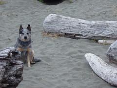 Dog Logs