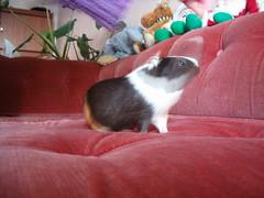 Toinen melissakummitus kuva (Random Forum) Tags: melissa sohva olohuone marsu kummitus tyttöjenasunto