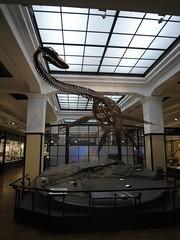 Tokyo 2008 - 國立科學博物館 - 日本館 (1)