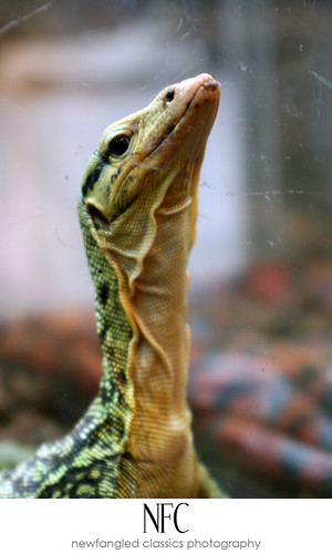 reptile expo 7