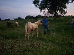 100_0559 (Pacogonzhumar) Tags: horse quarter colt palomino galope weanling potrillo cuartodemilla