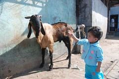 Marziya Shakir Bids Farewell To The Goat Before Slaughter .. Bakra Idd by firoze shakir photographerno1