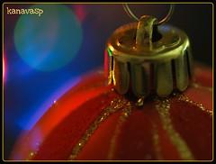 Marry Christmas!! (kanavasp) Tags: red fab color macro colors photo fdsflickrtoys perfect photos olympus greece e3 ing zuiko soe salonica atoz fpc zd blueribbonwinner splendiferous perfectshot beautifulshot zuikodigital flickrsbest olympusslrtalk zd50mmf20macro photographyrocks golddragon olympusesystem weatherphotography mywinners abigfave ilovemacro 50mms platinumphoto olympuszuikodigitalclub anawesomeshot colorphotoaward impressedbeauty infinestyle diamondclassphotographer flickrdiamond top20red ysplix excellentphotographerawards theunforgettablepictures brillianteyejewel overtheexcellence colourartaward macromarvels dazzlingshots theperfectphotographer goldstaraward mailciler olympuse3 solofotos fliccrspecialpicture spiritofphotography flickrbestpics amazingmacrosgroup flickrflorescloseupmacros panoramafotografico digifotoproaword internationalflickrawards magnificentmacros kanavasp maillmixstaraward