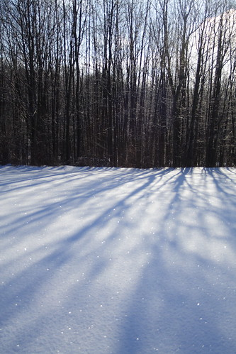 Tree Shadows on Sparkling Snow