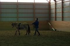 Testing the balance (janred) Tags: dressage carriagedriving breezie longreining chalamet ericchalamet