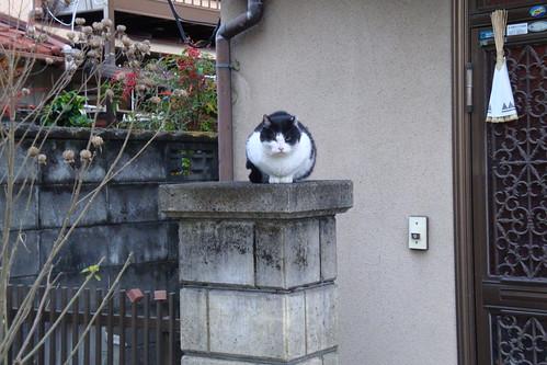ビビリ猫をビビらないで撮る