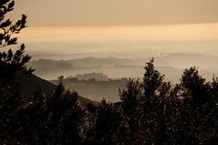 La nebbia agli irti colli - Fog on the hill (Stefano Mazzoni) Tags: light tree nature fog alberi landscape nikon natura sabina nebbia luce paesaggio collina d300 vegetazione soratte poggiomirteto poggiocatino stefanomazzoni stefano485 nijkond300 maglianosabino sabinashills