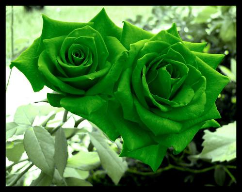Cvetna oaza - Page 9 3158833594_9fdd13e176