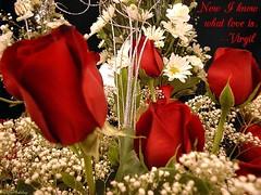 rose15 (vaishu87) Tags: kavithai