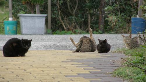 005.南雅社區很多貓