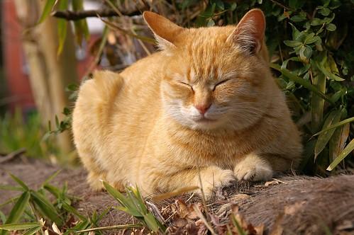 Stray Cat #37
