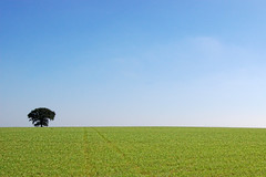 Simplicity (I Am Martin!) Tags: sea summer england sunlight tree night countryside nikon europe horizon east blueskies essex clacton colchester walton frinton tendring waltononthenaze themostbeautifulplaceintheworld tendringdisctrict