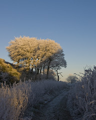 Sunny Afternoon (MarkyD31) Tags: trees winter cold tree nature scotland woods frost westlothian clearskies woodlandpath