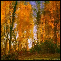 Automne-sur-rivire...!!! (Denis Collette...!!!) Tags: autumn trees wild canada reflection tree automne reflections river photo quebec photos rivire safari reflet arbres qubec rivers walden impressions oriental collette orient arbre reflets photosafari impression impressionist denis sauvages thoreau sauvage ogm impressionists rivires portneuf blueribbonwinner wildrivers wildriver supershot impressionistes impressionniste bej fineartphotos mywinners abigfave enstantane sensationnel anawesomeshot colorphotoaward impressedbeauty flickrbest deniscollette pontrouge infinestyle orientaux artoflight citrit riviresauvage theunforgettablepictures theunforgettablepicture newacademy overtheexcellence theperfectphotographer goldstaraward world100f rubyphotographer kunstplatzlinternational ubej riviressauvages photossafari worldsartgallery naturecrations