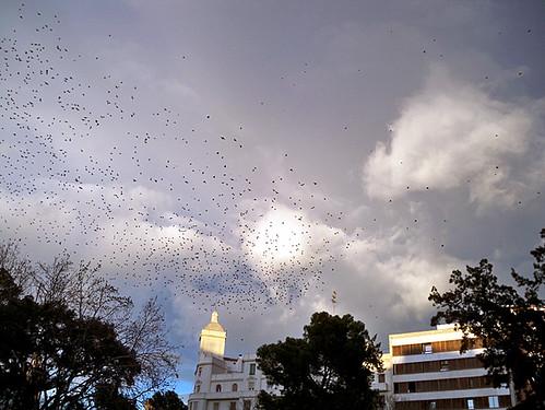 birds-Valencia