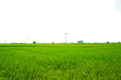 Green Green Field