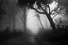 Missing (Lus C) Tags: light shadow tree forest woods mood darkness sintra transition peninha d90 pprowinner