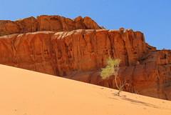 Désert du Wadi Rum (josboyer) Tags: wadirum jordanie