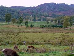 Red Deer at    scottish highland wildlife park (gmj49) Tags: appenninosettentrionalealpinatura