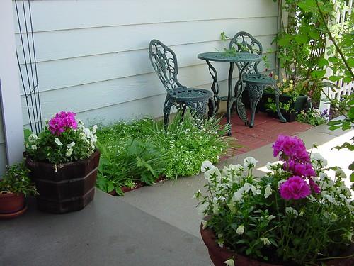 Front walk flowers