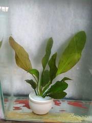 Thủy Sinh Tuấn Anh-Chuyên cây & Rêu Thủy Sinh, Cá Cảnh Biền & Hồ Cá Cảnh Biển - 8