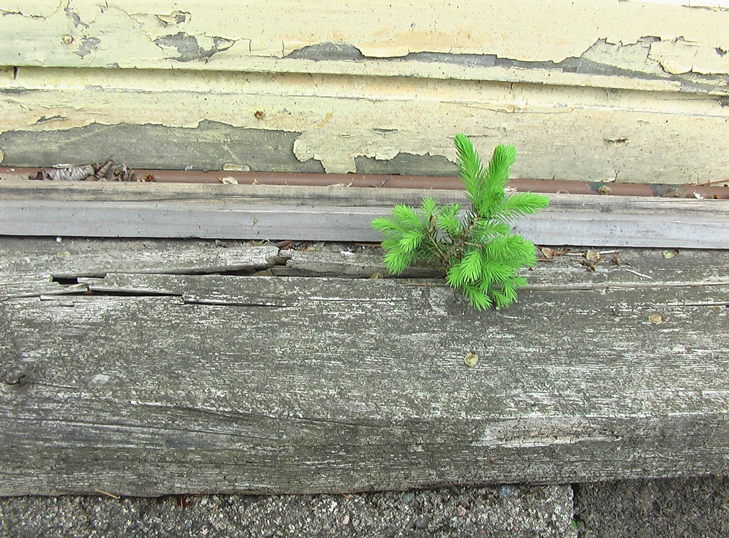 A little tree growing out of a piece of wood
