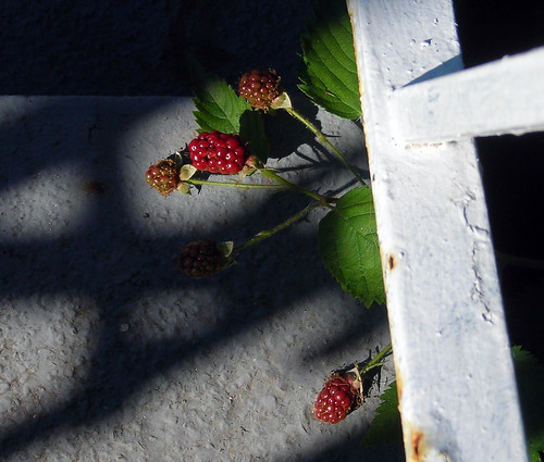 Garden 6/24/08