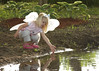 Don't fall in... (lorijohernandez) Tags: family kids fun abeautifulevening lillysbirthdayparty