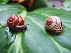 Snail rail (Anniko 1996) Tags: nature relax snail schnecke schnecken escargots expressyourself cherryontop 365days abigfave aplusphoto goldstaraward flickrlovers
