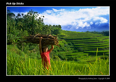Pick Up Sticks (VJ Spectra) Tags: light bali sun film girl indonesia landscape sticks nikon rice terrace slide velvia nikkor carry ricepaddy beautifulbali exceptionallybeautifulbaligallery