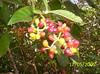 frutitas exóticas (♥  evelyn  ♥) Tags: misiones iguazufalls cataratasdeliguazú
