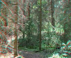 3D trees (dojomojomofo) Tags: 3d trails reddeer callipygian stereoscopy callipygian3d