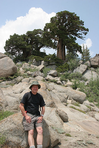 Carson Pass - Juniperus occidentalis