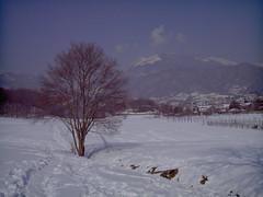 Sentieri di caccia... (Sockrates 1984) Tags: snow field neve albero prato placebo localit schio narcoleptic toresele