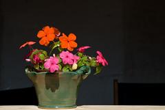 matching colors (Jeroen Hillenga) Tags: flower bloem bloempot